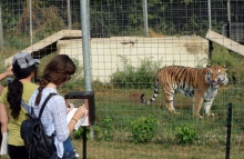 Dominican University Students at Big Cat Rescue